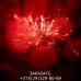 Фейерверк Панорама FP-B104